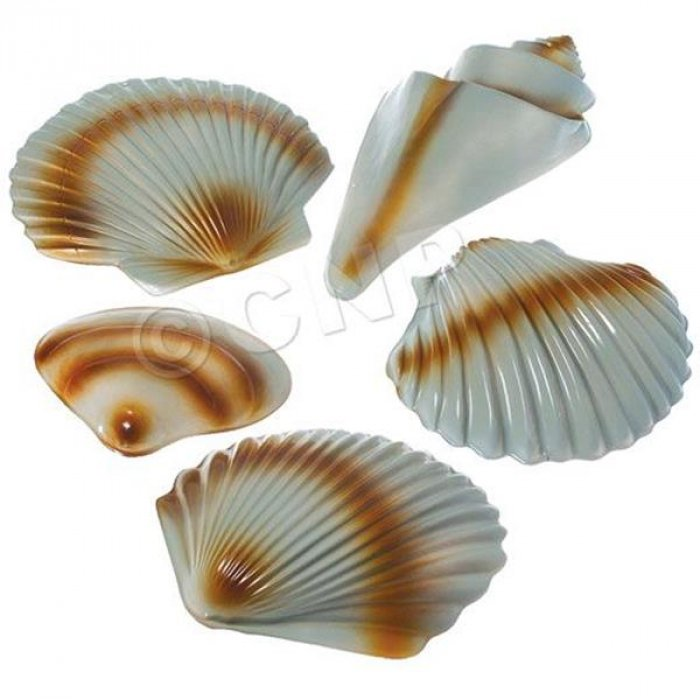 Sea Shell Decorations